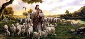 Shepherd Leadership